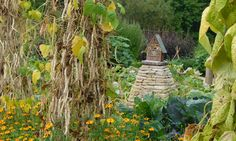 French climbing bean 'Lazy Housewife' grows up teepees. Le Manoir Aux Quat'Saisons potager (ornamental vegetable/kitchen garden)
