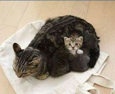 """Dis my Mom. We da fur babies!"" #BigCatFamily"