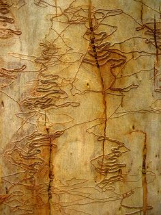 This is texture on bark i think - how incredible is nature? Looks like delicate embroidery - just amazing! Natural Forms, Natural Texture, Patterns In Nature, Textures Patterns, Tree Patterns, Fotografia Macro, Tree Bark, Texture Art, Mellow Yellow
