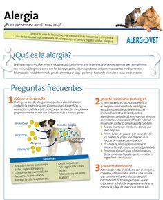 #alergia en perros