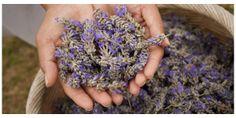 Why we love lavender