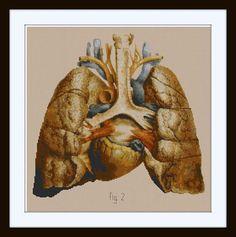Anatomical Human Lungs and Heart Cross stitch pattern PDF / Anatomy pattern / Medical Illustration. Etsy $8.00 pattern