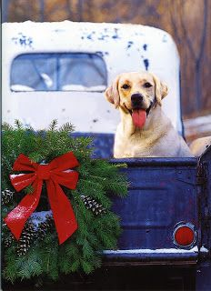 PetsLady's Pick: Cute Country Christmas Dog Of The Day Noel Christmas, Christmas Animals, Little Christmas, Country Christmas, All Things Christmas, Winter Christmas, Christmas Truck, Christmas Scenes, Christmas Clipart