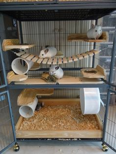 The chinchilla cage is the place where your cute pet is exercising, climbing and rolling-over. You chinchilla will be happy to play and relax there. Cage Chinchilla, Ferret Cage, Hamster Cages, Diy Chinchilla Toys, Pet Rat Cages, Chinchillas, Pet Rats, Animal Room, Cages For Sale