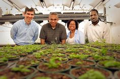 A single challenge, a suite of experts  |  CALS' plant biologist, Dr. Terri Long,  joins two computer engineers & an environmental engineer in a multidisciplinary team. The group will create computer models of how plants will respond to future stress, such as nutrient deficiencies & climate change, to address world food security. Read article | http://www.ncsu.edu/features/2013/04/a-single-challenge-a-suite-of-experts/