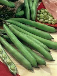 Broad bean (fava bean) Aquadulce Claudia, plant them now! Great article by growveg.com shows you how...
