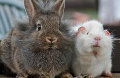 New Zealand Takes First Step to Ban the Use of Animals for Cosmetic Testing!  http://www.onegreenplanet.org/news/new-zealand-takes-first-step-to-ban-cosmetic-testing/