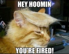 LOL! -- #Cat #Cats #FunnyCats #FunnyAnimals #Animals #CatHair #HairBall #Toupee #Trump #DonaldTrump #Combover #FunnyHair #Hair