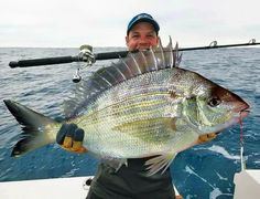 """This is what happens when you accidentally use """"Miracle Grow"""" while chumming for Pinfish... #pinfish #miraclegrow"""