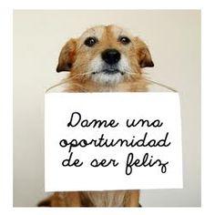 Pliz no compren perros de raza, adopten perros sin casa <3 (me salió con rima :v)