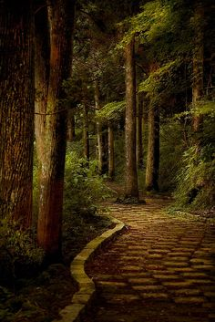nature | trees | stone path | japan | hakone | kanagawa