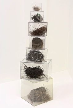 Display Natural Curiosities In Clear Boxes