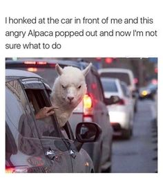 23 Hilarious Animal Memes So Cute They'll Make You LOL Other names for animals Need a Laugh? These Animal Memes Should Do the Trick! Funny Doggo Memes That Will Get Your Tail Wagging Top 40 Funny animal pi. Funny Animal Jokes, Funny Animal Pictures, Cute Funny Animals, Funny Cute, Funny Images, Funny Pics, Super Funny, Funny Pictures Can't Stop Laughing, Animal Humor