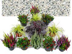 Grabbepflanzung Set Urnen- oder Einzelgrab Wechselbepflanzung Herbst - Winter bunt
