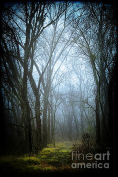 A misty forest with a mossy floor. Photo Katya Horner