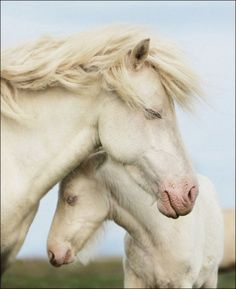 peaceful moment with mother and foal