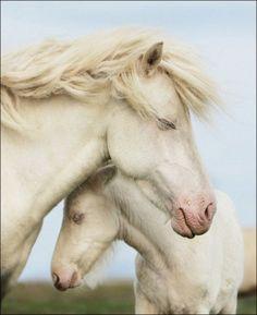 albinos ♥♥♥