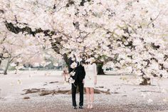 Cherry Blossom Engagement Photos In Tokyo by Romp Photography