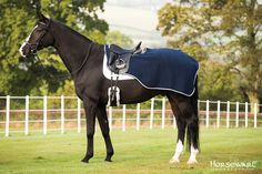 Horseware Collection S/S16: Rambo Competition Sheet. Visit www.horseware.com to find your nearest stockist.