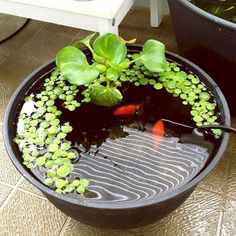Cool 65 Gorgeous Backyard Ponds and Water Garden Landscaping Ideas https://wholiving.com/65-gorgeous-backyard-ponds-and-water-garden-landscaping-ideas