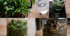 Šalvěj má silné antibiotické vlastnosti a působí proti množství mikrobů, například při zánětech močových cest, angíně, zánětech zažívacího t... Glass Vase, Herbs, Decor, Decoration, Herb, Decorating, Deco, Medicinal Plants