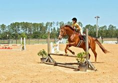 Le voir s'est quelque chose, le faire s'est autre chose, monter sur un cheval s'est quelque chose, lui donner en plus toute ta confiance s'est autre chose♥l'équitation plus qu'on sport, une passion♥#moi