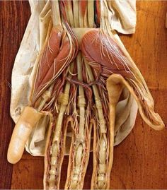 Anatomy of hand