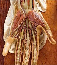 Anatomy of hand