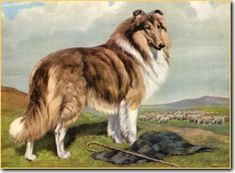 Collie by Edwin Megargee