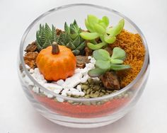 succulent terrarium in slope bowl autumn sand art #trendingterrariums #PlantNite