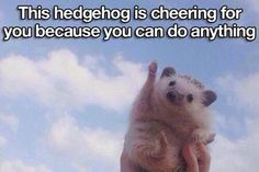 Hedgehog is cheering for you.  Dont worry, be happy (15 photos)