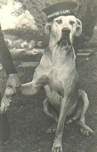Just Nuisance was a Great Dane who lived on a British naval base in South Africa during World War II. The Royal Navy enlisted him to prevent him from being put down, and he was buried with military honors.