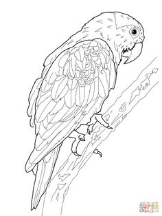 Printable Funny Parrot Coloring Pages. On this page, you can find the most beautiful parrot coloring pictures for children! Get these parrot coloring pictures w Coloring Book Art, Coloring Pages To Print, Printable Coloring Pages, Coloring Pages For Kids, Coloring Sheets, Kids Coloring, African Grey Parrot, Bird Drawings, Animal Drawings