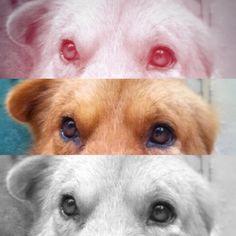mi perro es super bello como esta foto de el te quiero mucho Peluche #love