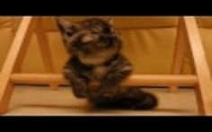 Sleepy Kitten Knows the Struggle is Real and Fights to Keep Her Eyes Open (VIDEO)