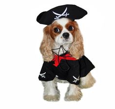If yer getting together with yer mateys for Halloween, make sure you are dressed to impress. This fun Caribbean Pirate Dog Costume will certainly draw some smiles! Great for Halloween, costume parties, walking the plank or photo sessions!