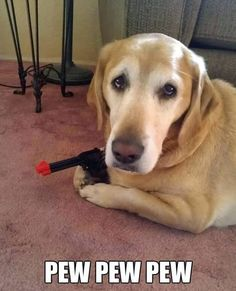 Funny anim.al picture of golden retriever holding toy gun
