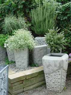 herbs in concrete pots