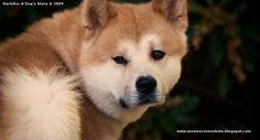 Hachi Cast | Hachiko: A Dog's Story (2009) part [3/3]