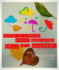 Autumn Leaves Rain