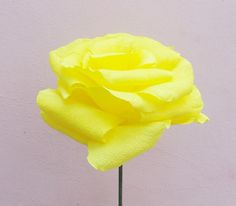 Sweet Yellow Rose (50 LEI la Nunny.sDiary.breslo.ro) Yellow Roses, Sweet, Flowers, Plants, Candy, Florals, Plant, Flower, Bloemen