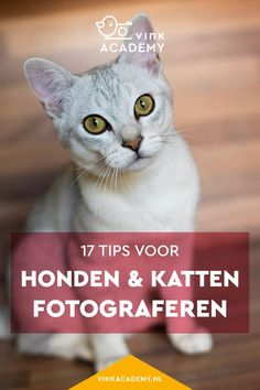 Fotografie tips: honden en katten fotograferen doe je zo. Maak de mooiste foto's van je huisdier met deze handige fotografietips en voorbeeldfoto's ter inspiratie. In het artikel gaat het over camera-instellingen, licht en meer. #vinkacademy