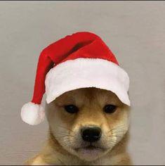 Supreme Iphone Wallpaper, Game Wallpaper Iphone, Glitch Wallpaper, Haikyuu Wallpaper, Gato Anime, Gamer Pics, Dog Icon, Famous Dogs, Current Mood Meme
