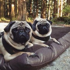 happy national earth day plz take care of it By ernestthepug  http://bit.ly/1OWsqXE  #carlino