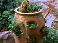 This terra cotta strawberry pot takes on a whole new look with plantings of Sempervivum, also known as hen and chicks.
