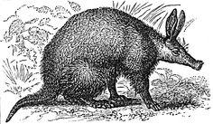 aardvark.jpg (1034×603)