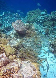 Snorkeling Klein Bonaire - Don't Miss These Stunning Reefs