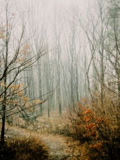 Mysterious Path  Foggy Woodland  Nature Landscape by LilyShihPhoto