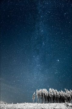 Milky Way and Finnish Forest    photo by Janne Heimonen