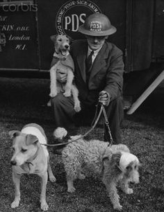 Rescue Worker With Injured Dogs - HU020892 - Rights Managed - Stock Photo - Corbis. William Barnett, a rescue worker with the People's Dispensary for Sick Animals, sits with his resue dog, a wire-haired terrier named Beauty, on his lap. Two injured dogs, which he has rescued, stand at his feet. England, April 1941.
